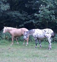 Bückeburg, Pferde