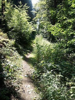 auf dem Weg nach Helmarshausen (Reinhardswald)