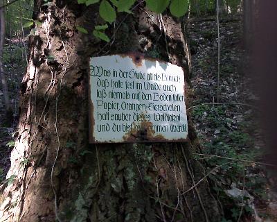 Im Wald bei Guttenberg