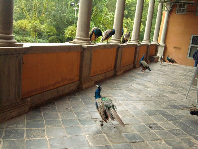Interessante Vögel am Schloss Rheydt
